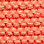 koralli-909713