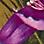 Oliv/Multicolor-715904