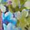 Multicolor-983379